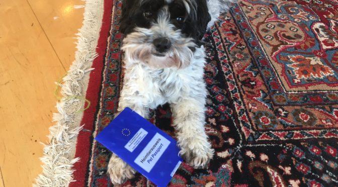 Minus 46 – Der Hund muss mit